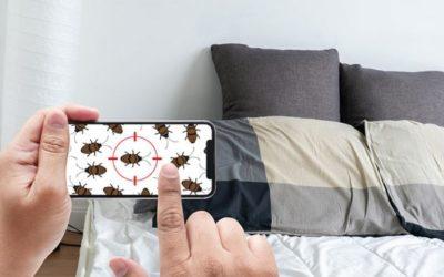 Les conseils de votre agence immobilière de Lissieu pour ne pas avoir de punaises de lit !